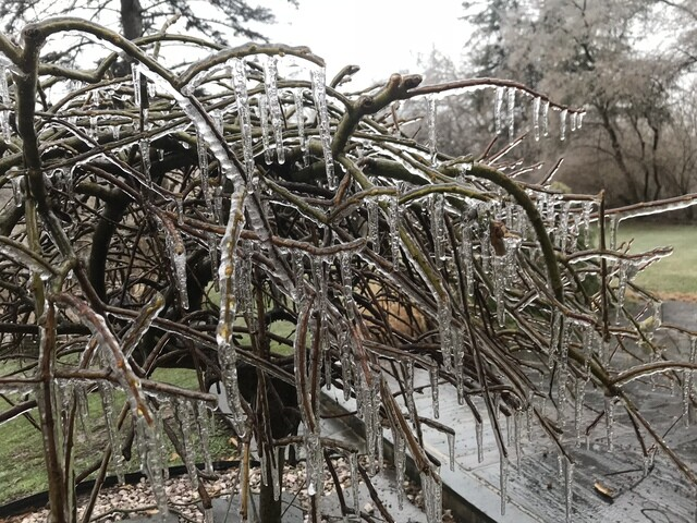 PHOTOS: Freezing rain leads to icy conditions in metro Detroit