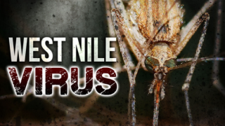 West Nile Virus.png