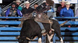 Campbell wins 2nd Cody/Yellowstone Xtreme Bulls title