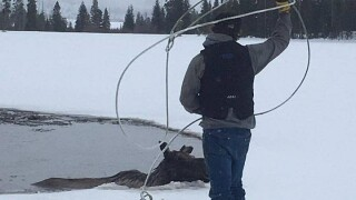 Crews try to save moose that fell through the ice near Lincoln