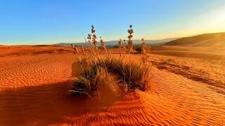 Hurricane Sand Dunes.jpg