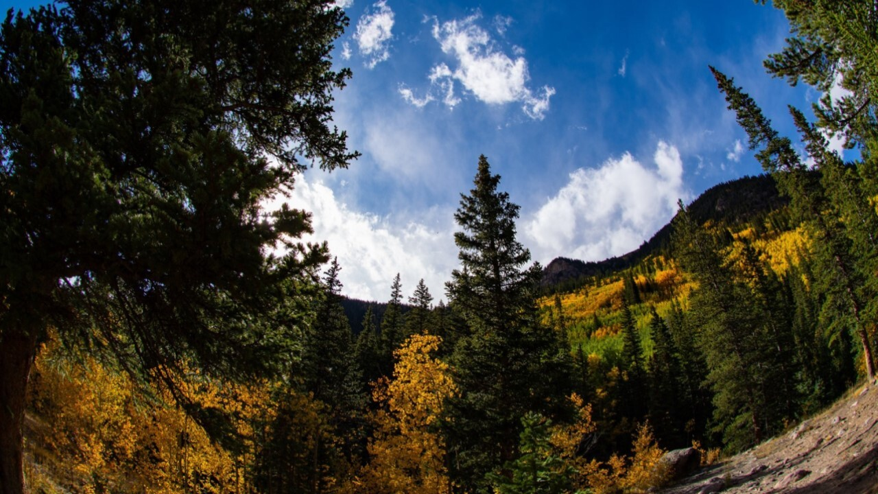 Leaves changing over Guanella Pass
