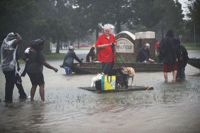 Animal Rescues: Saving pets after Hurricane Harvey