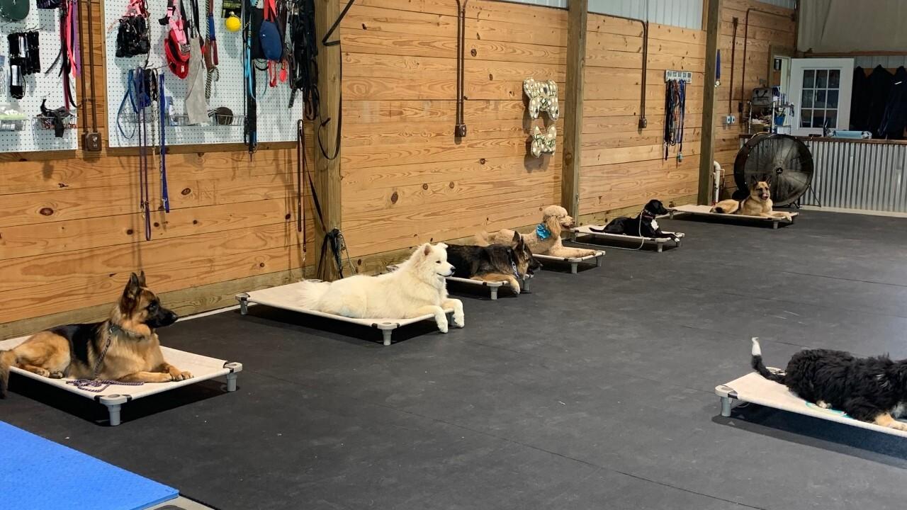 Fresh Canine Training