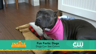 Paws & Claws: Fun Facts About Dogs &Cats