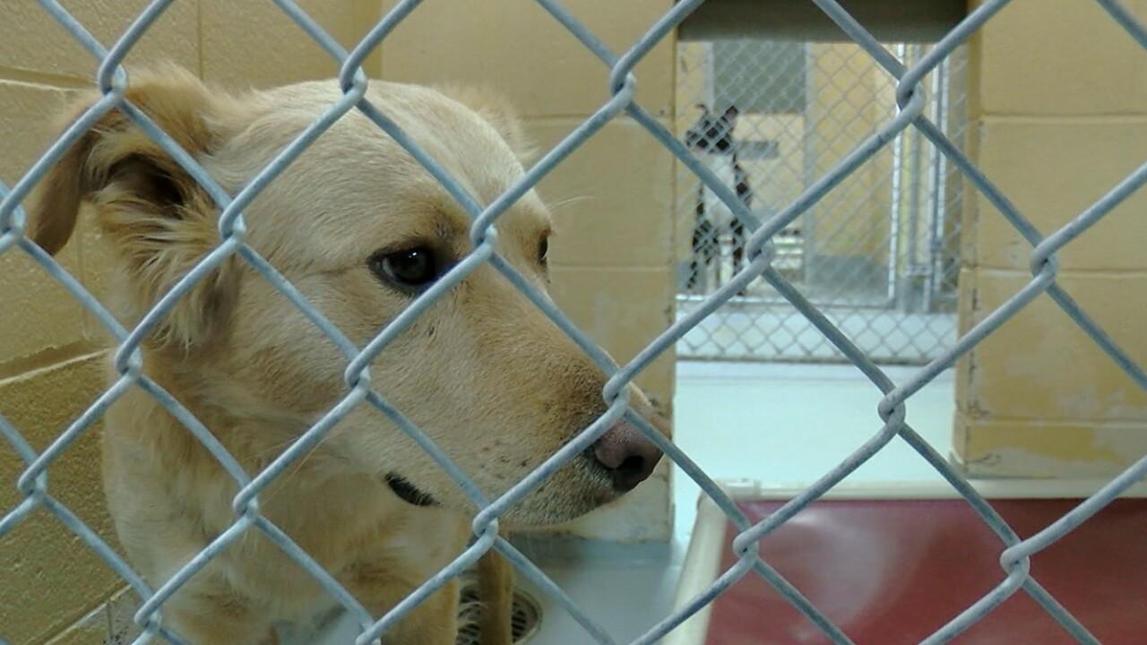 tulsa animal shelter.jpg