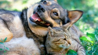 dog_and_cat_x2.jpg