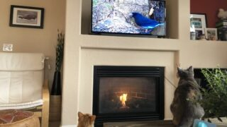 Amazon Prime Has Free 'cat TV' To Entertain Your Pets While You're Gone