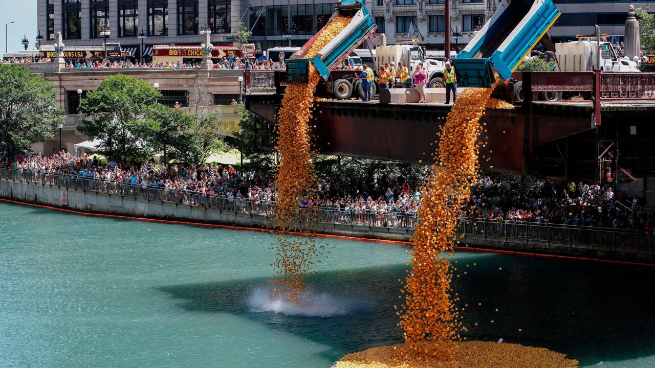 Over 63,000 rubber ducks were dumped into the Chicago River for charity