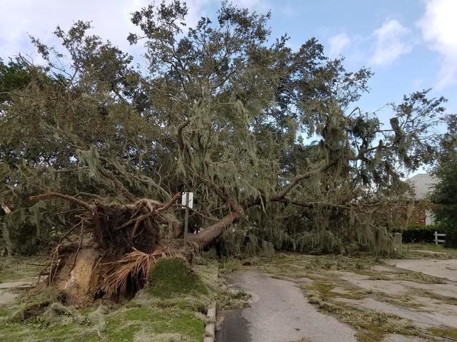 Photos: Irma damage scenes in Hillsborough, Polk counties