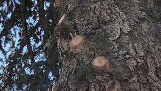 Chopped Branches
