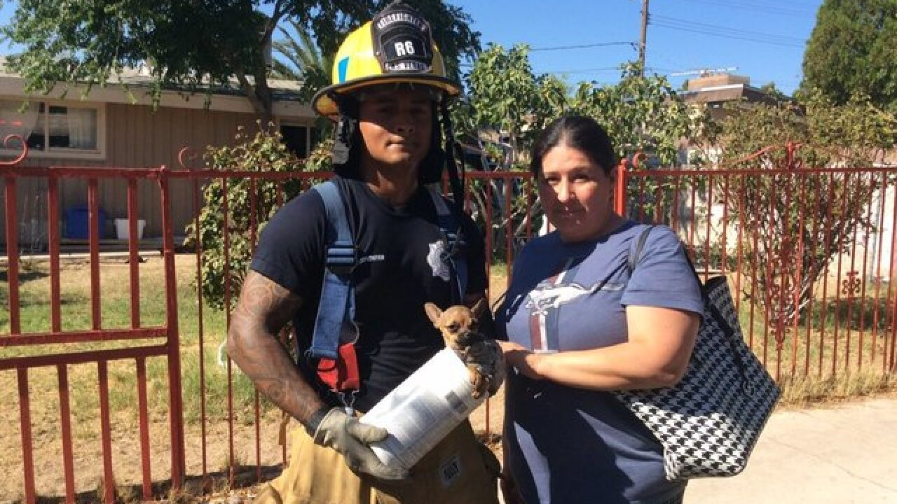 Firefighter saves dog on first call