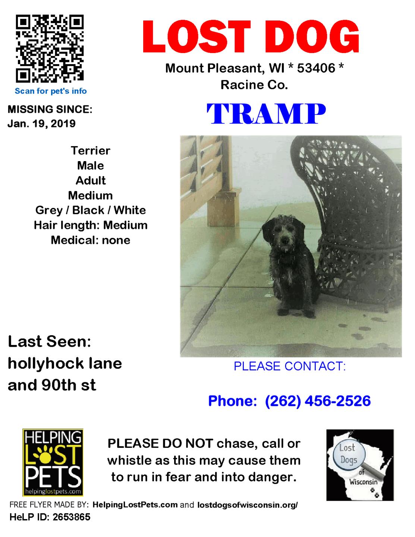 0119 Tramp Terrier Adult.png
