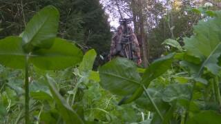 Pandemic hunters 1