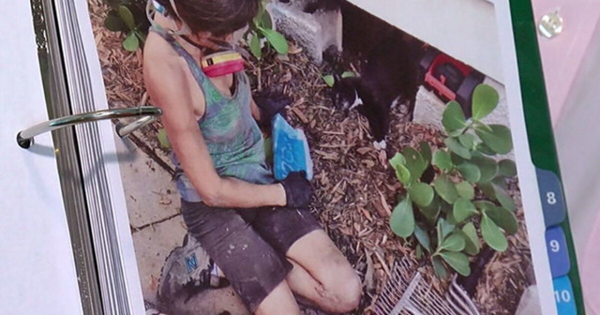 Couple wants new rules for pest companies after cat killed