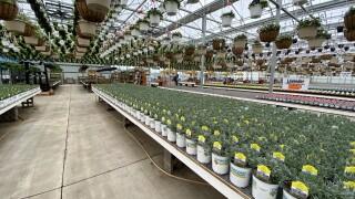 Countryside Greenhouse Allendale Inside During Coronavirus