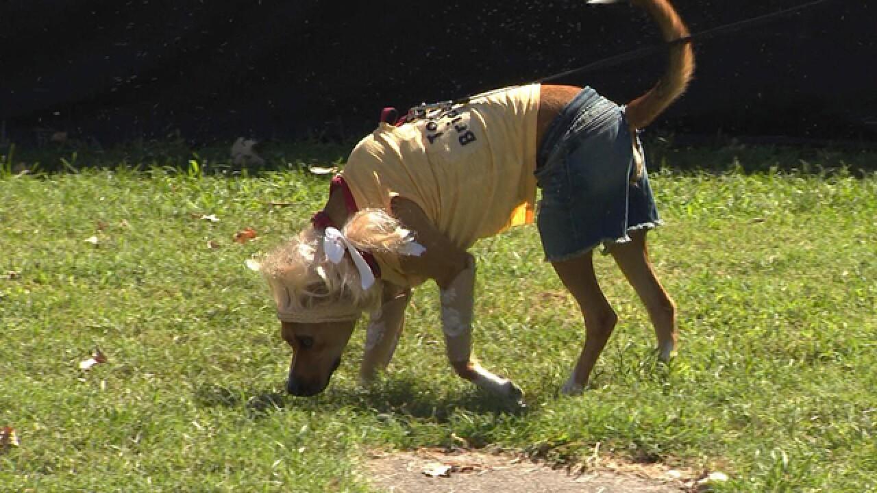Dog Day Festival Takes Over Centennial Park