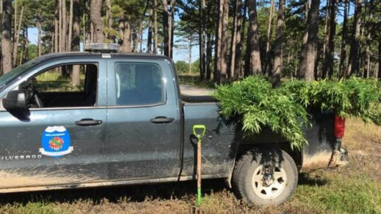 Oklahoma Game Wardens find marijuana grow site on wildlife management area