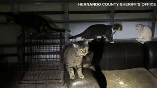 Cat-Rescue-Hernando.png