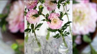 Fast Fix – Keep Flowers FreshLonger