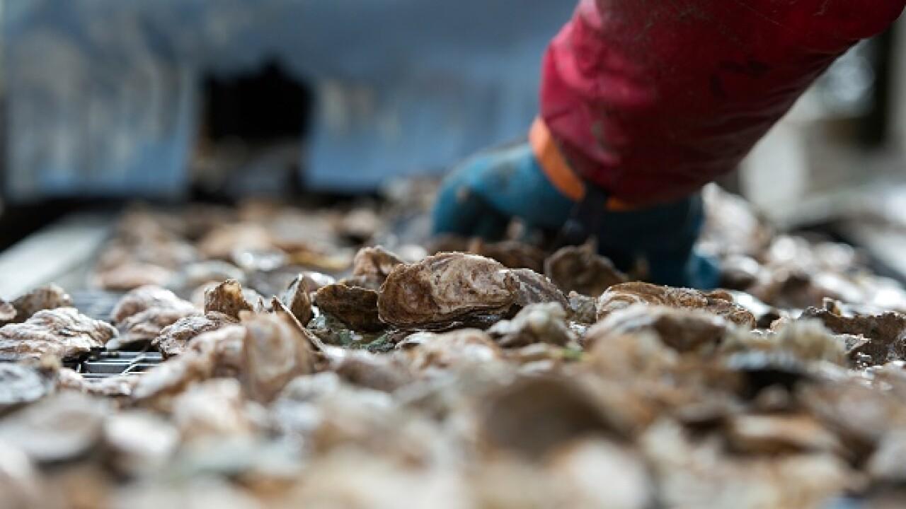 Chesapeake Oyster Bay Foundation needsvolunteers