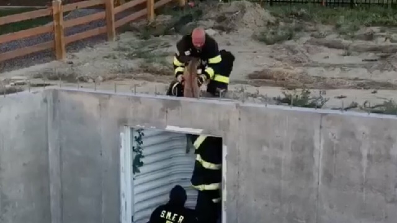 VIDEO: Firefighters rescue fawn stuck at construction site in Colorado