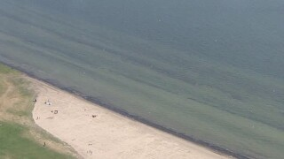 Lake St. Clair Metropark beach closed due to elevated E. coli levels