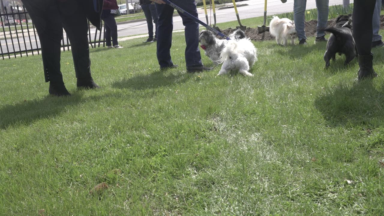 Betty's Dog Park