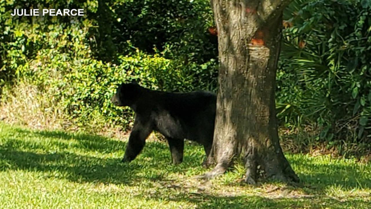 BEAR-001.png