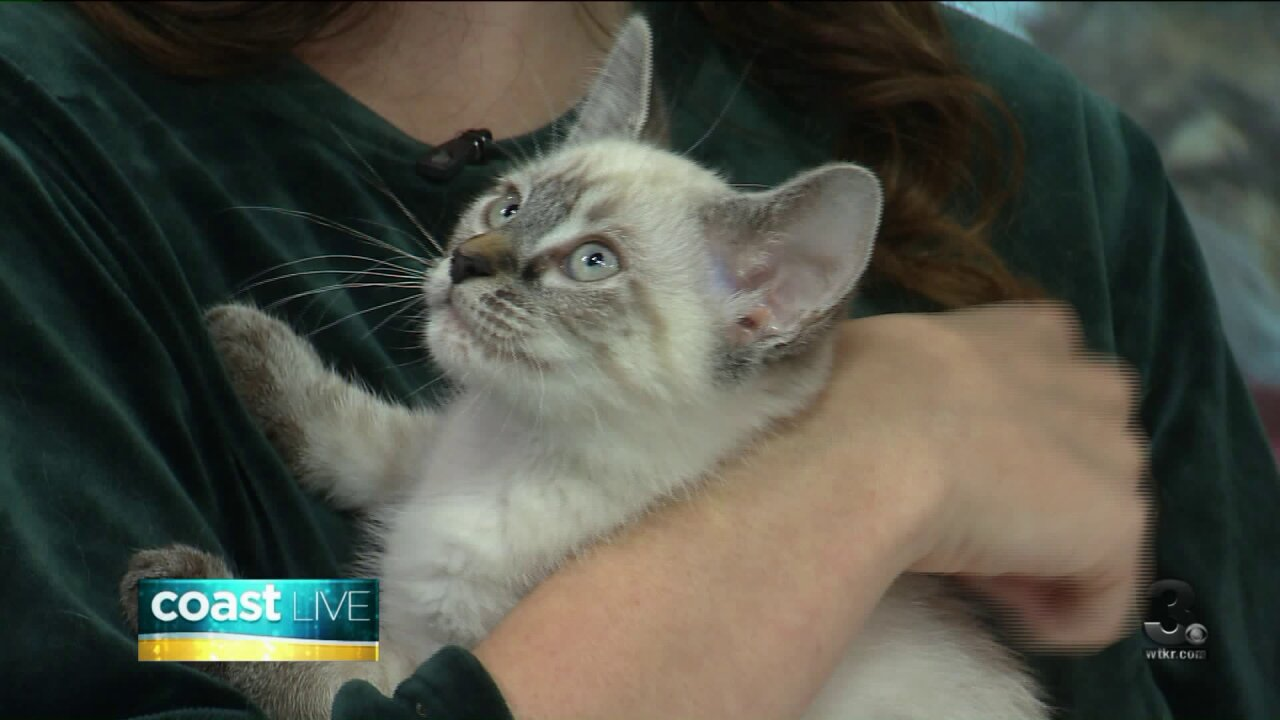 Fostering pets for the holidays on Coast Live