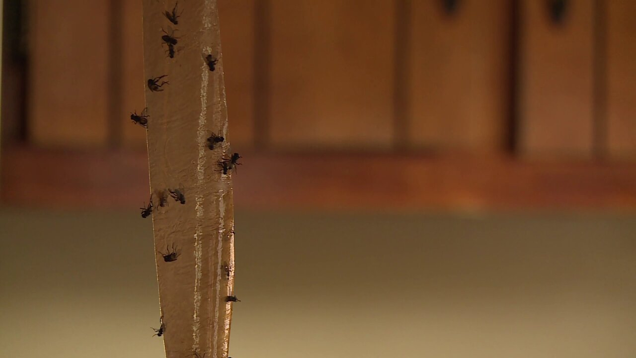 State updates New Kent neighbors about flyproblem