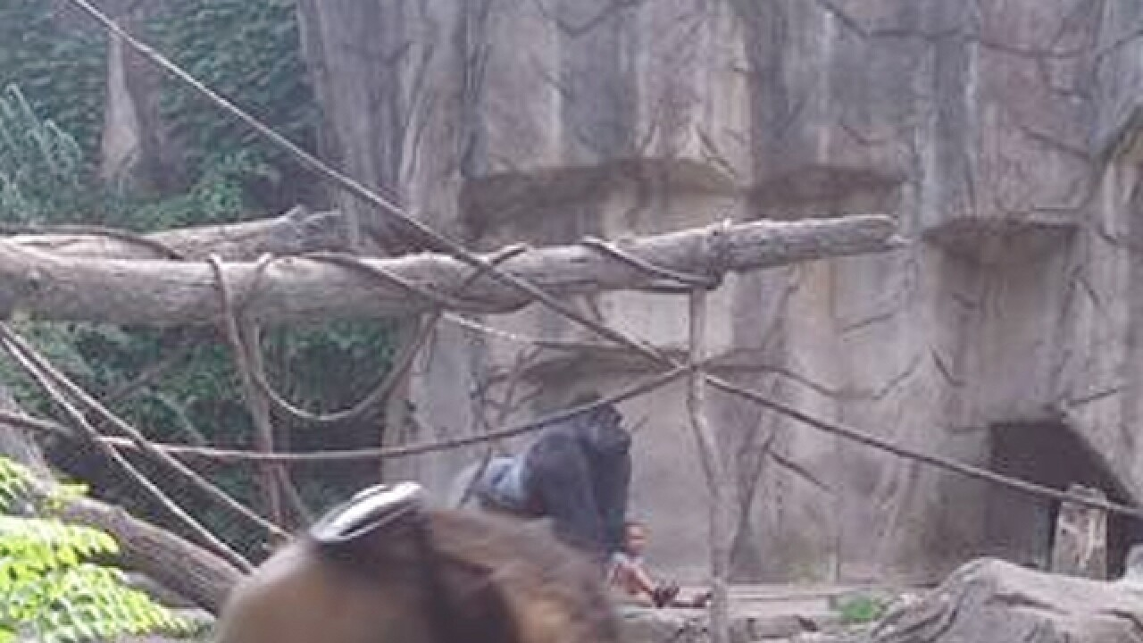 Gorilla attacked child who fell into zoo exhibit