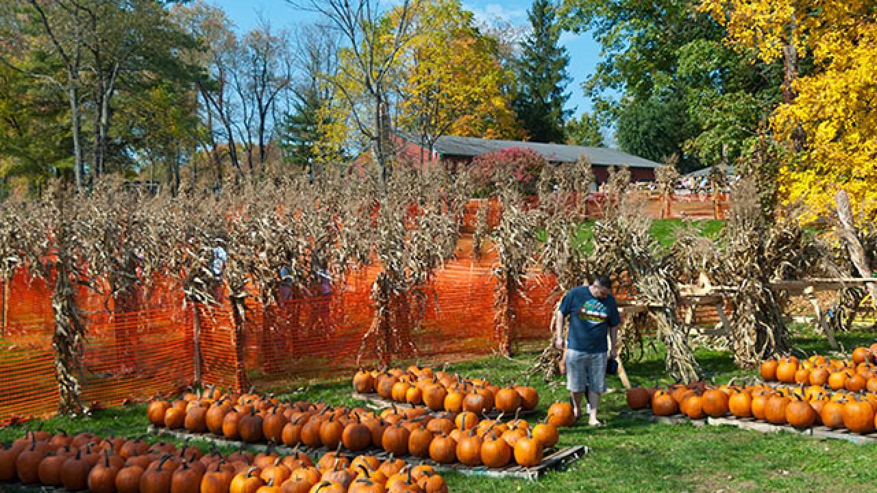 Halloween Events Northeast Ohio On Halloween 2020 Celebrate Halloween with these 15 events in Northeast Ohio