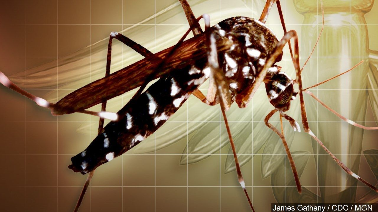 Mosquito tests positive for West Nile Virus in Williamson County