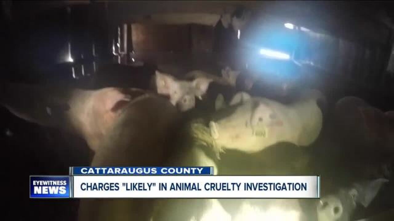 Man accused of neglecting pigs arrested in Ashford
