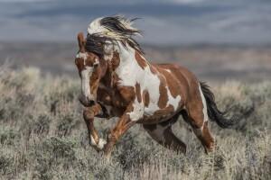 Picasso wild horse