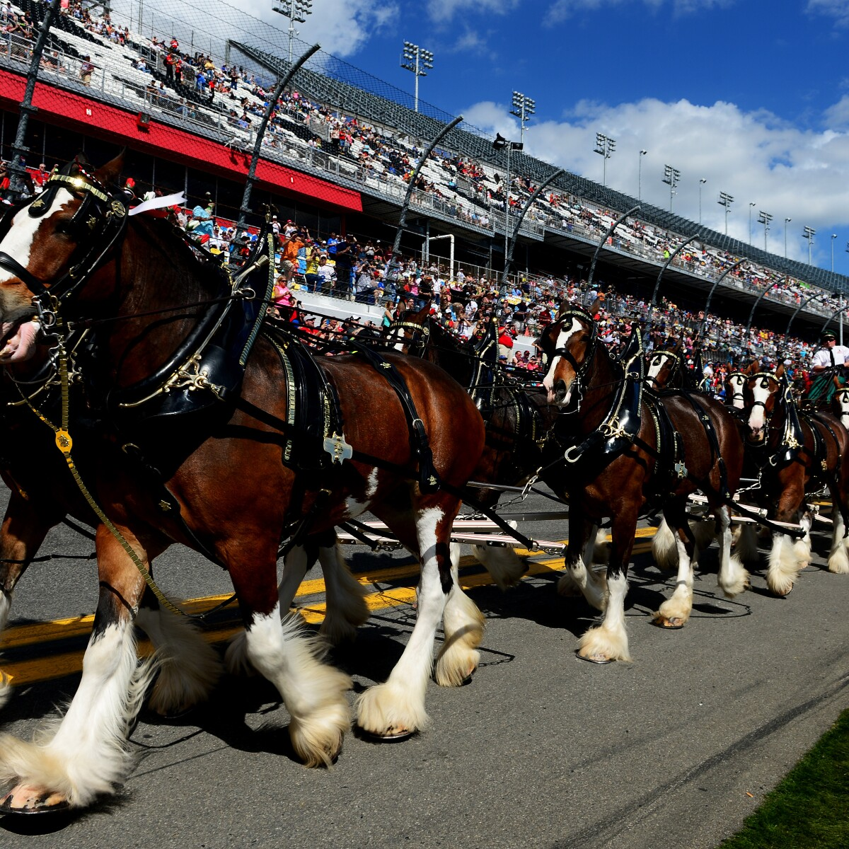 Budweiser Clydesdales Coming To Colorado Capitol Monday