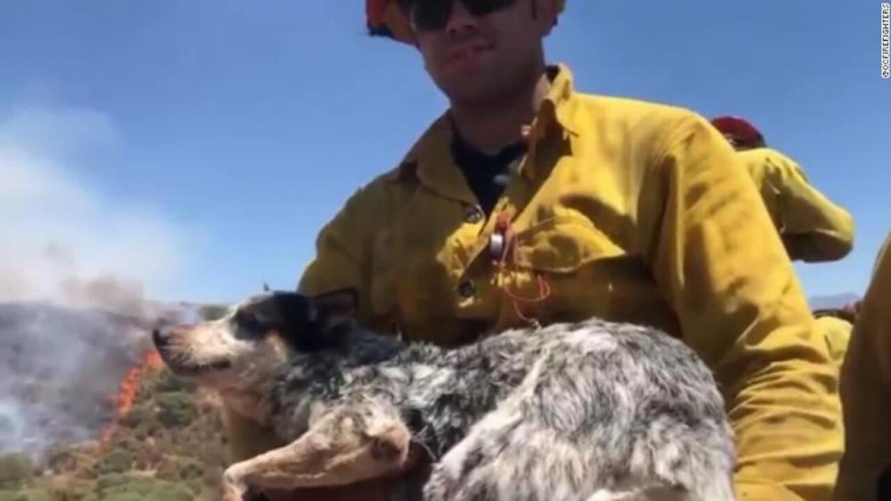 Firefighters rescue dog from Apple Fire in Southern California