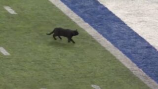 A Cat Ran Onto The Field During Monday Night Football And The Announcers Did An Awesome Play-by-play