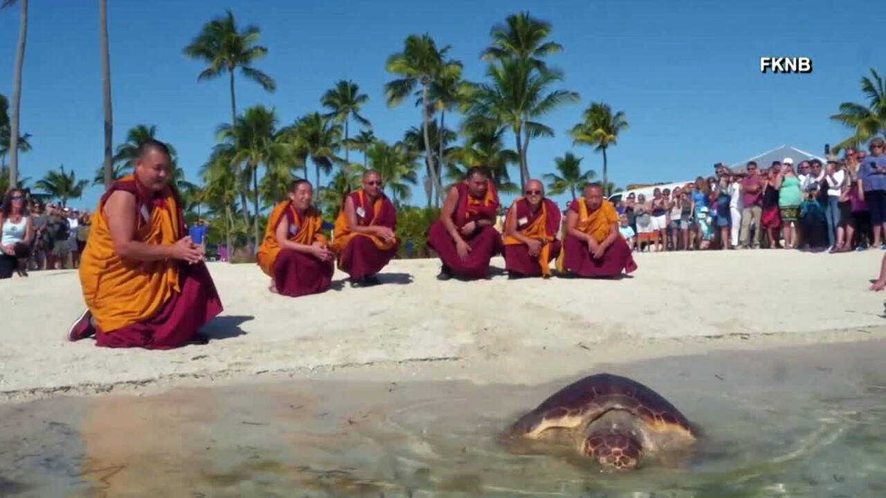 Visiting Tibetan monks helped release a rehabilitated sea turtle in the Florida Keys.