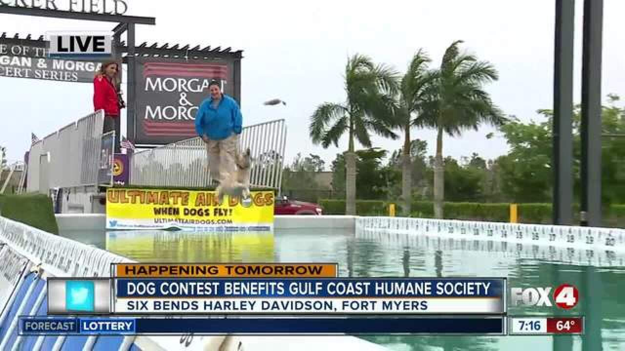 Dog jumping contest benefits humane society