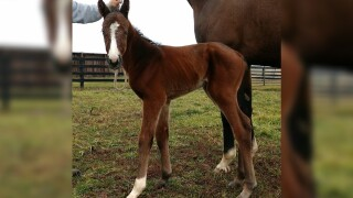 First offspring of Triple Crown winner Justify has been born