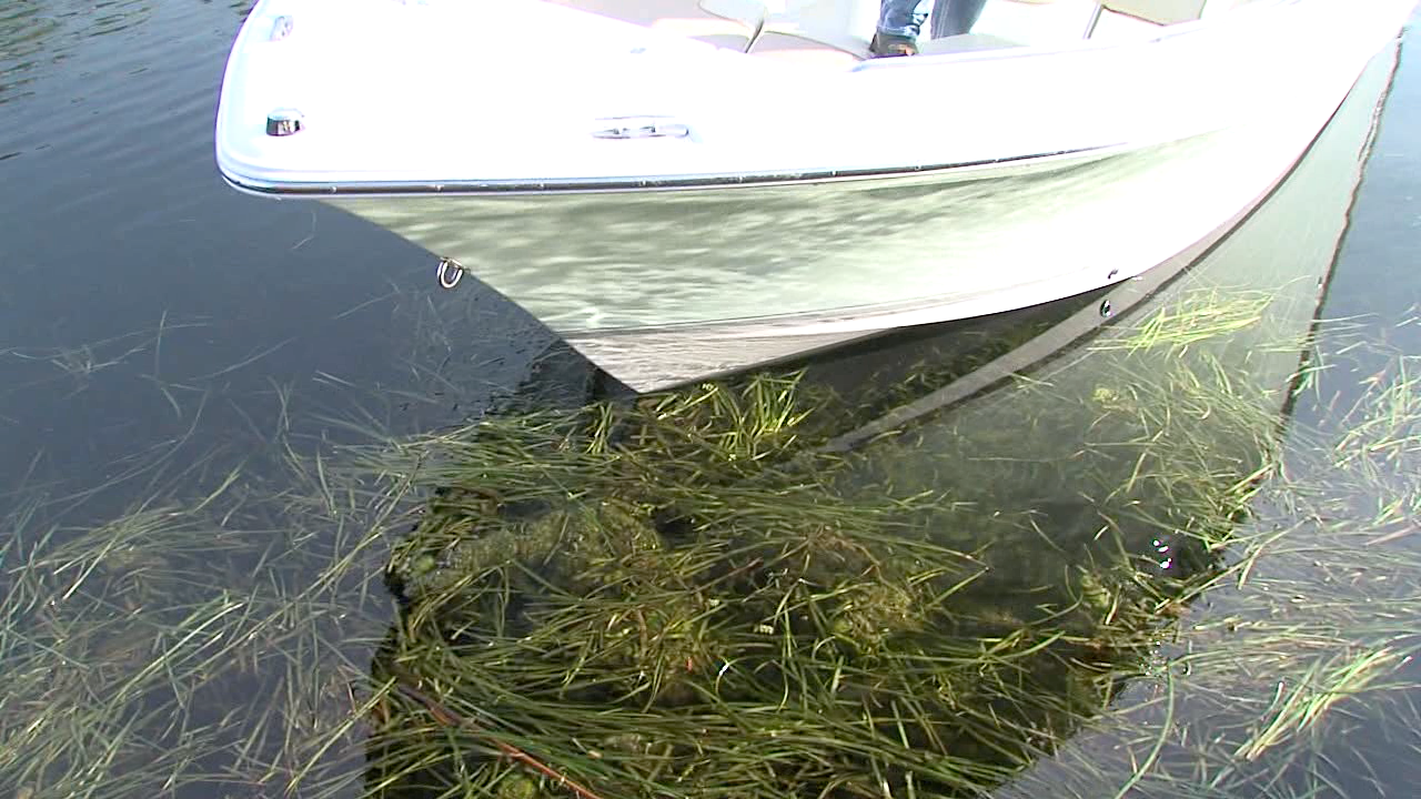 crystal river seagrass.png