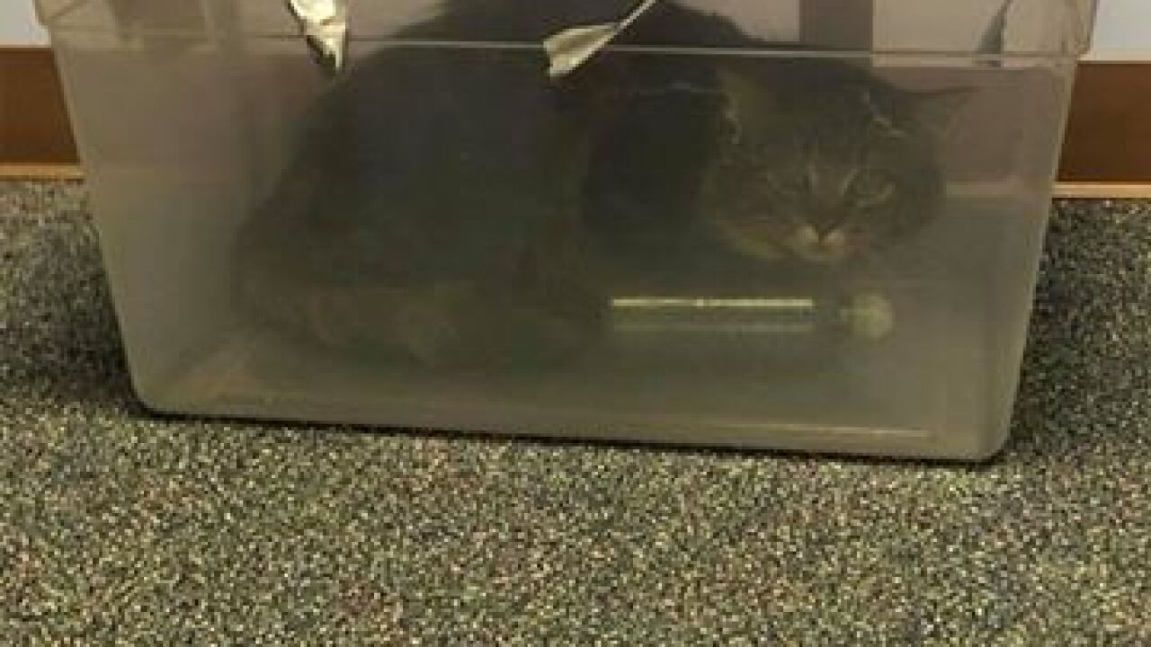 Cat found duct taped inside plastic bin, police searching for suspect