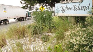 Tybee Tracking Tourists