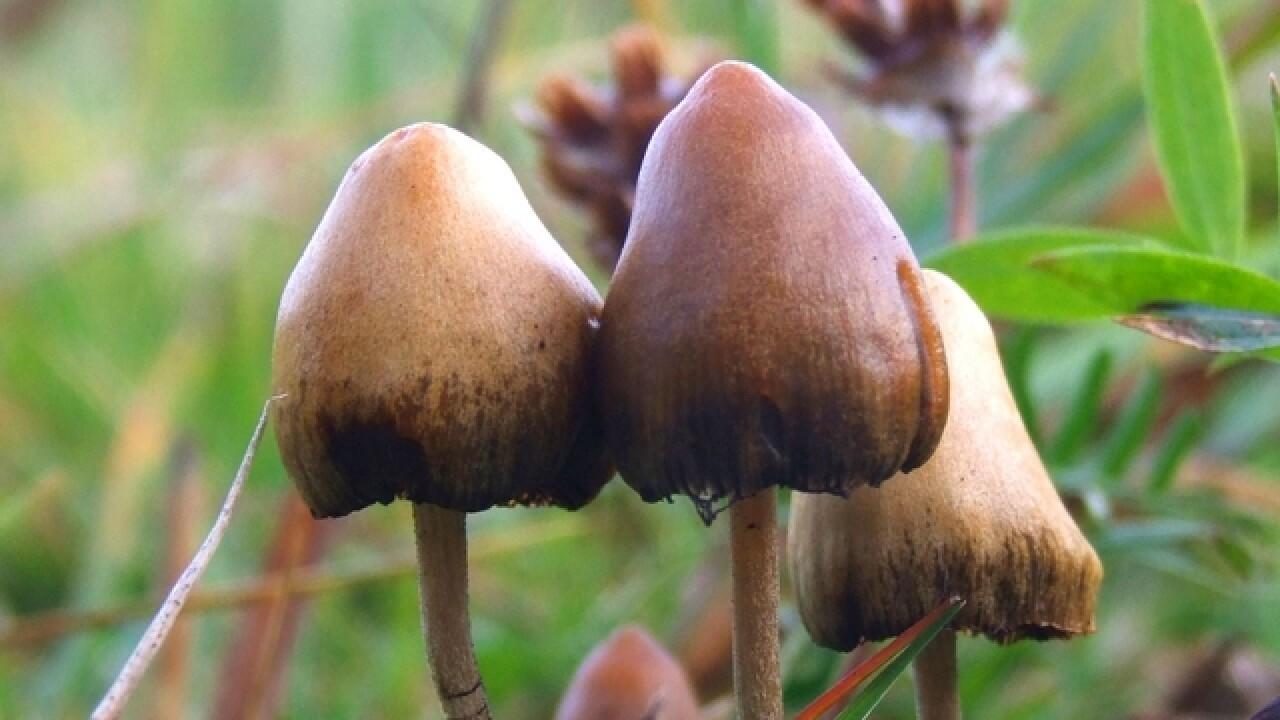 Morel Mushroom Michigan Map.Morel Mushroom Hunting Underway In Michigan