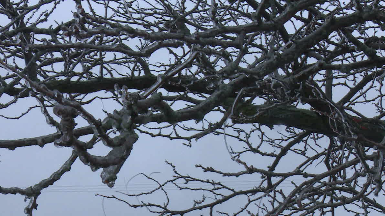 1.11.20 Frame Grab - Iced-Over Branches.PNG