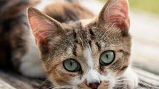 barn cat program