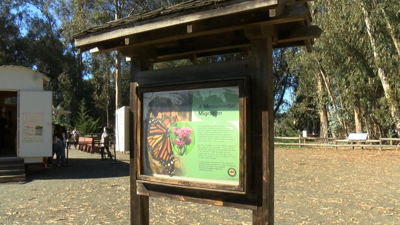 monarch butterfly pismo.PNG