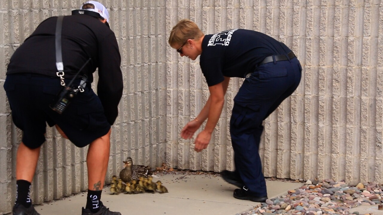 Missoula firefighters pressed into service as duck wranglers